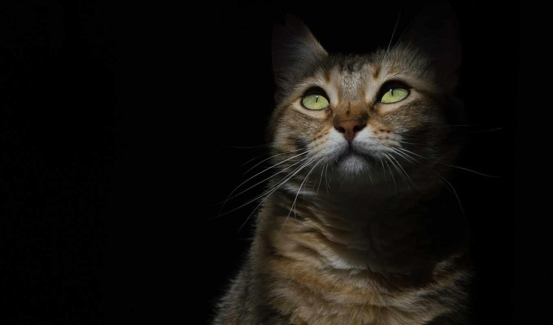 животные, кот, категории, shadow, animals, телефон, black,