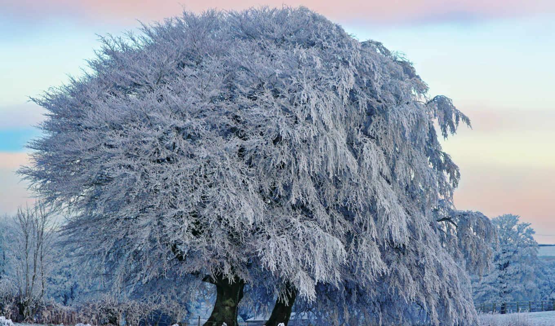 дерево, большое, инеем, покрытое, zima, иней, разных, priroda, разрешениях,