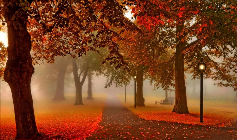 осень, park, природа, деревя, картинка, листья, аллея, взгляд, закат, lantern,