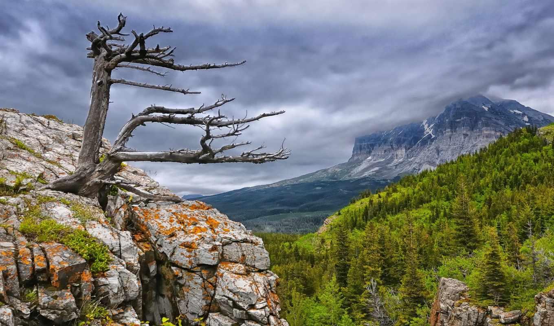 mountains, дерево, trees, clouds, growing, лес, природа, rock,