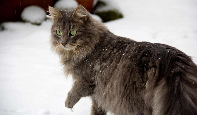 снег, глаза, кошка, серая, зеленые, зима, животные, кошки,