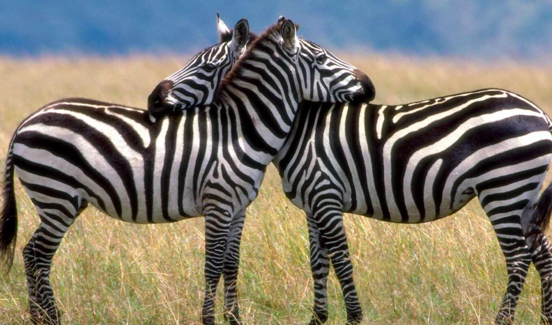 животных, всех, миру,