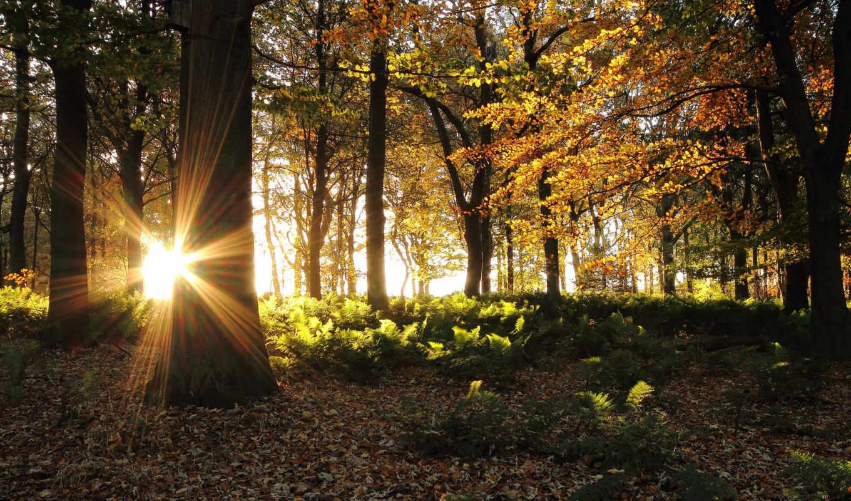 les, солнце, деревя, лес, лучи, солнечные, осенний, разных, дерево, разрешениях, osen,