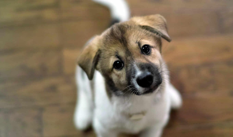 щенок, щенка, собаки, full, ему, dogs, she, fund,