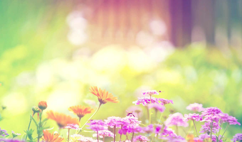 summer, природа, цветы, свет,