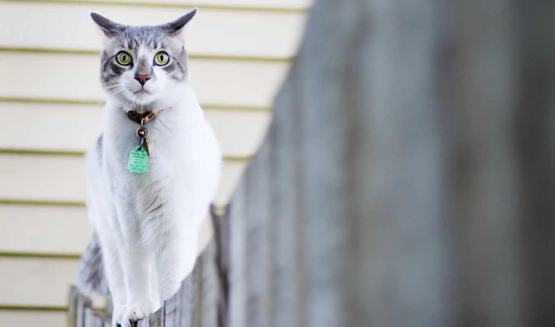 кошки, марта, широкоформатные, кошка, собака, кот,
