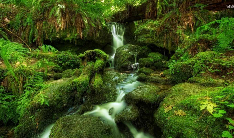 река, water, desktop, лес, mossy, share, rock, природа,