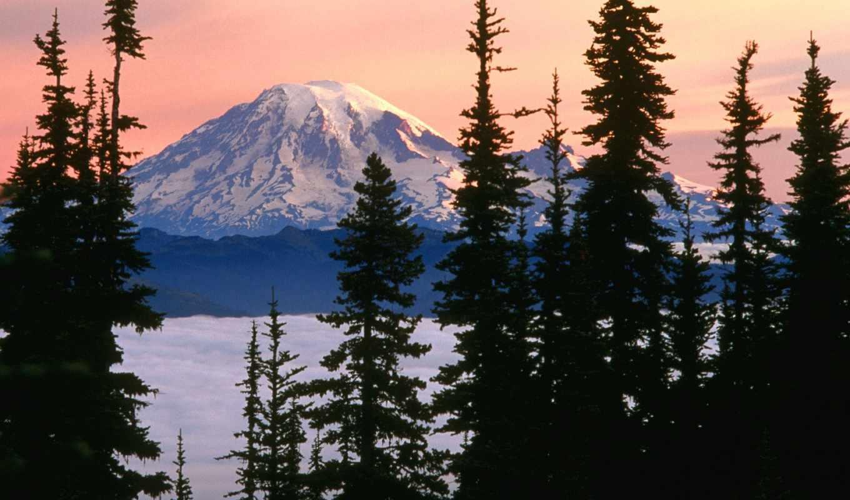 горы, снежные, лесом, за, хвойным, гор, slide,