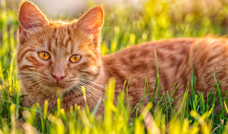 ginger, кот, die, staffel,