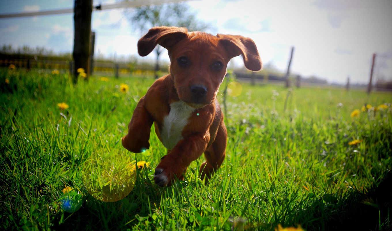 summer, sun, щенок, run,