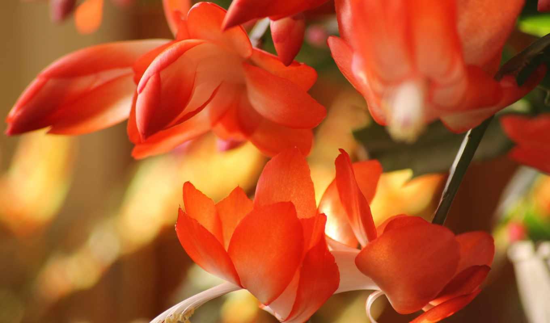 цветы, pantalla, fondos, flores,