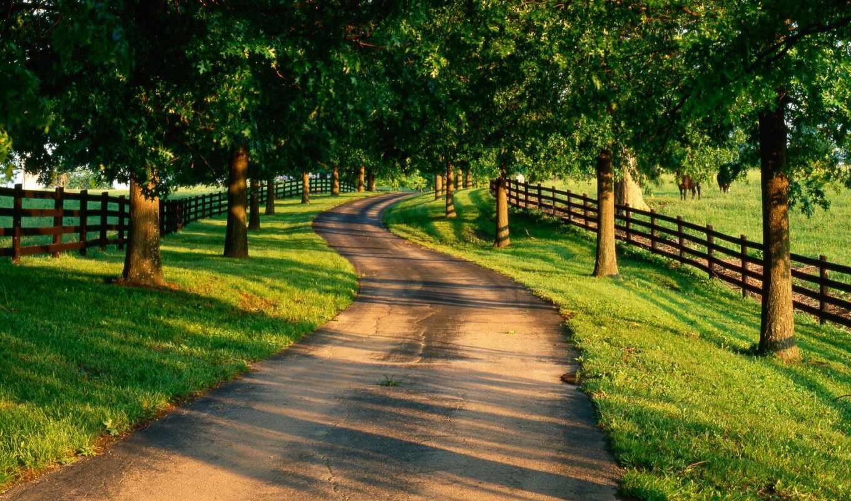 summer, природа, дорога,
