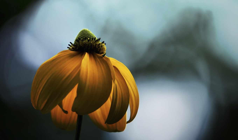 свет, hope, flowers, осень, лепестки,