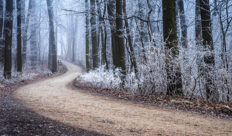 природа, осень, деревя, иней, дорога, лес,
