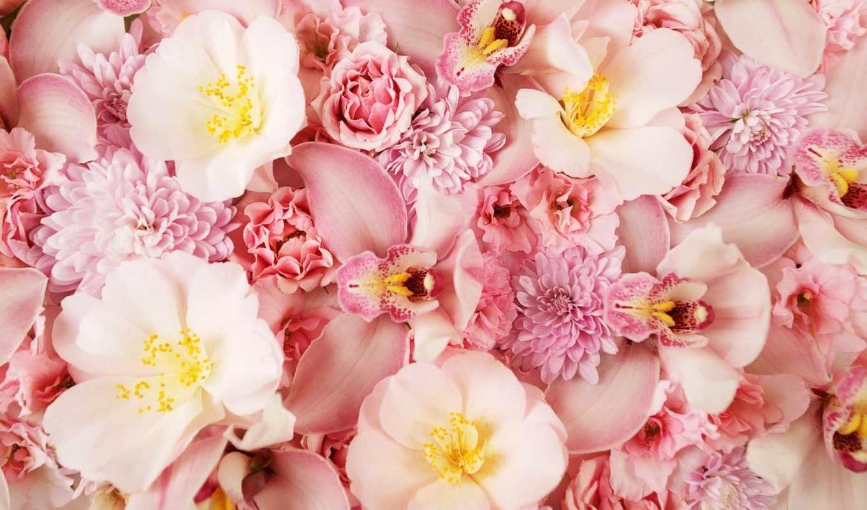цветы, орхидея, заставки, розовый,