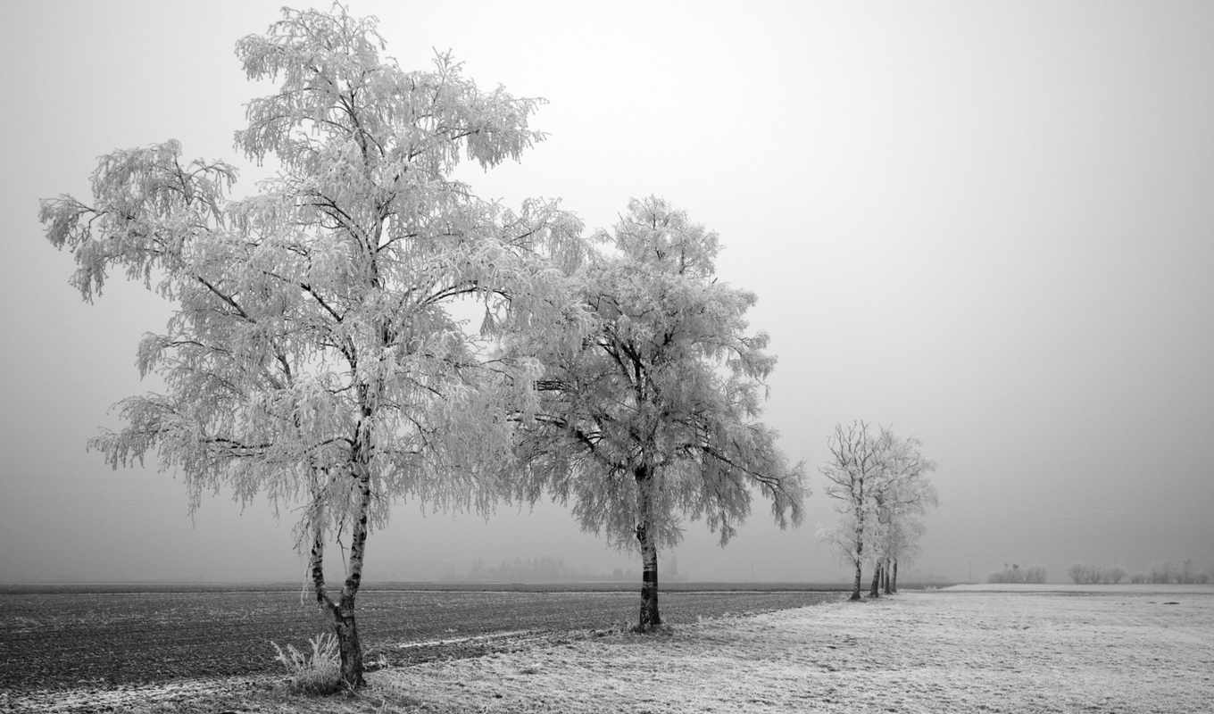 winter, nature, деревья, frozen, trees, snow, black, desktop, landscapes, tree, fog, field, white,