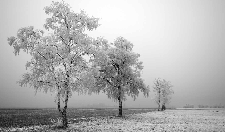 winter, nature, деревья, frozen, trees, snow, black, desktop, landscapes, tree, fog, field, white,