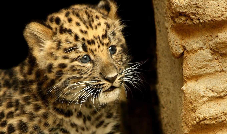 животные, малыш, детёныш, усы, пятна, взгляд, маленький, смотрит,