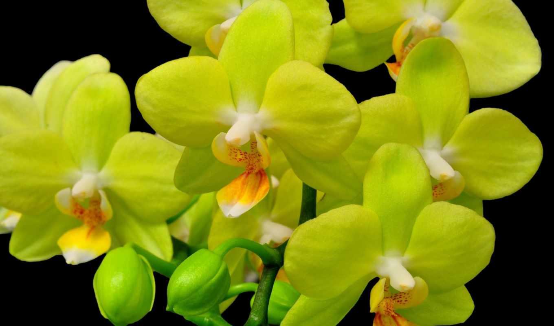 орхидея, цветы, ветка, взгляд, белая, black,
