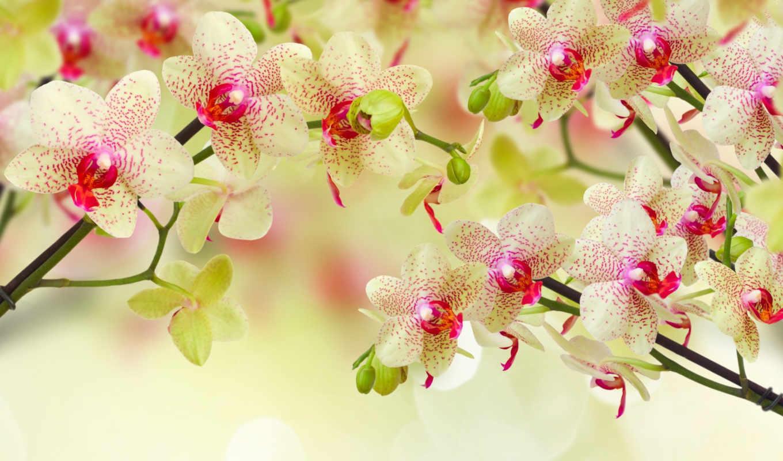 world, красоты, цветы, за, же, мира,