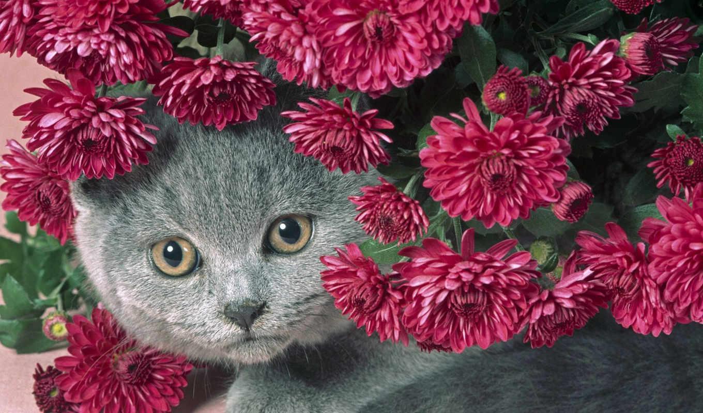кот, цветы, серый,