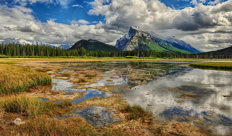 swamp, лес, пейзажи -, весна, пасмурно, virtual, trees, жюли,