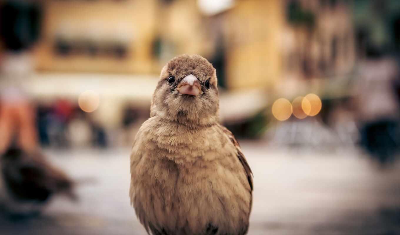 event, птица, animal, іо, mac, ipad, clique, hewan, coklat, one