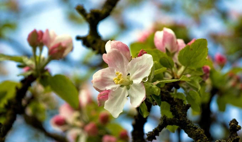 деревья, цветут, ветки, картинка, ней, правой, разрешением, кнопкой, скачивания, save, картинку, выберите, мыши,