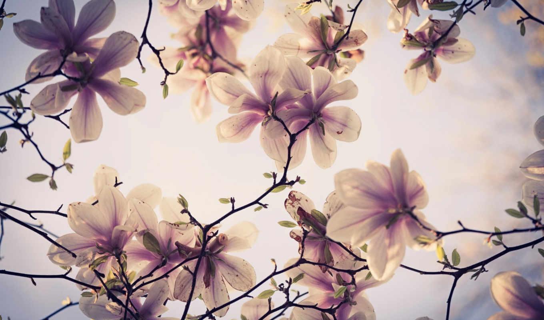 цветы, дерево, flowers, pictures, весна, марта, free,