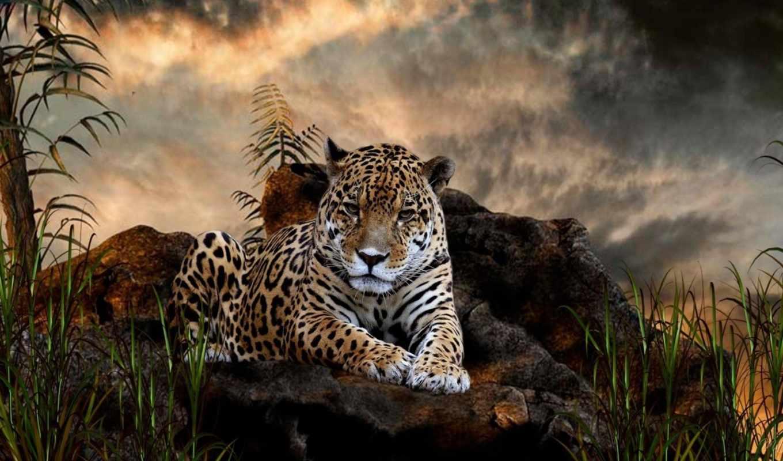 кот, jaguar, cats, дикая, животные, леопард, хищник, black, wild, ягуары,