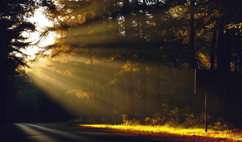 рассвет, sun, утро, лес, природа, trees, дорога, горы,