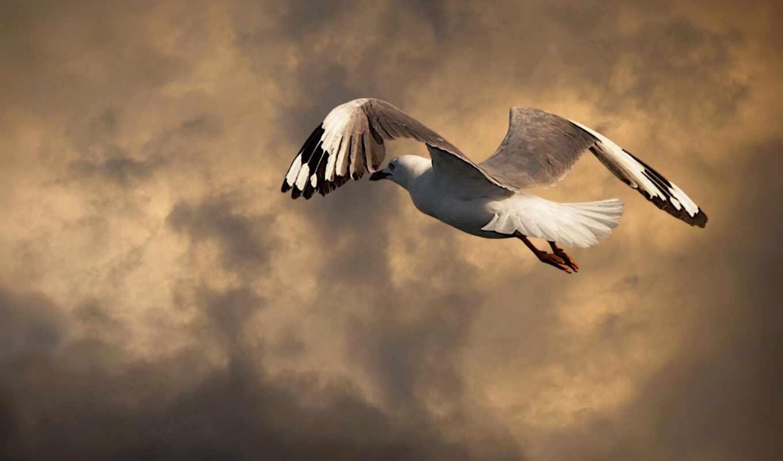 seagull, mac, flug, wolken, d-mmering, чайка, hintergrundbild