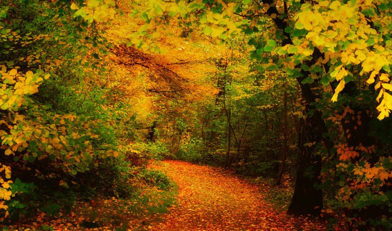forest, amazing, осеннем, красивая, way, тропинка, лесу, autumn, поделиться, download, вернуться, hotwalls,