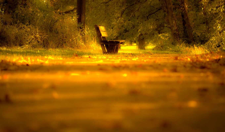 скамейка, дорога, свет, деревья, листья, desktop,