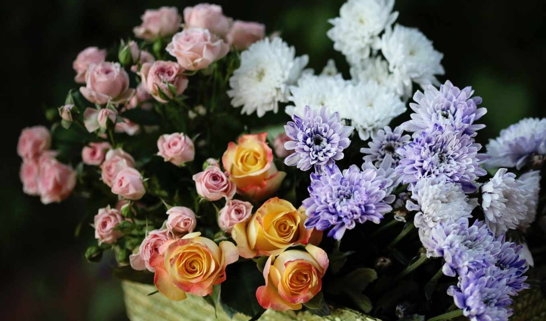розы, хризантемы, троянди, рисунки, cvety,