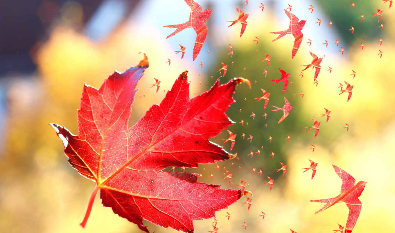 листь, кленовый, osen, makro,