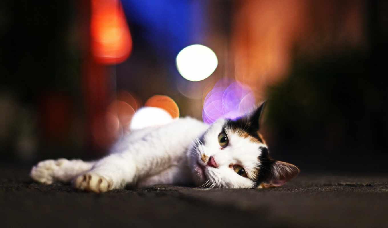 кот, кошки, kotyara, котэ, бесплатные,