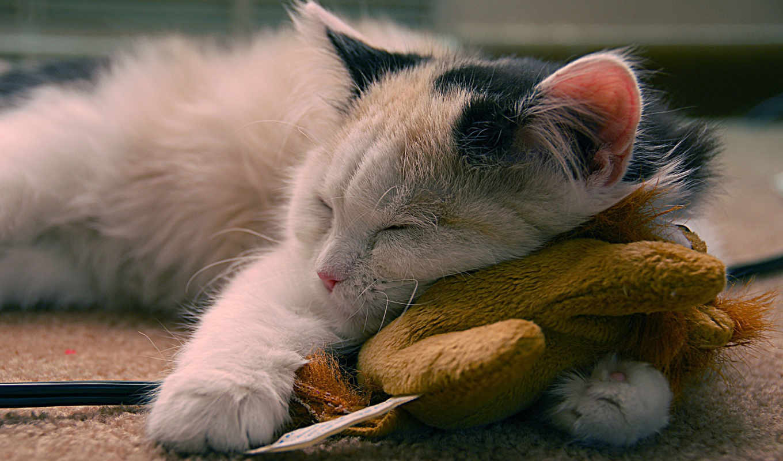 кот, cute, sleeping, postcard, день, mania, name