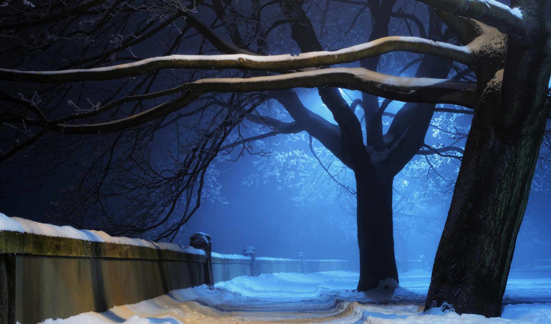 ночь, снег, зима, природа, деревья, свет, алейка, парк, картинка, стена,