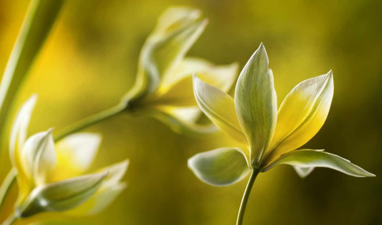 цветы, макро, желтые, природа,