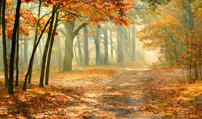 landscape, природа, мм, пейзажи -, pej, осенние, дорога, деревья, осень,