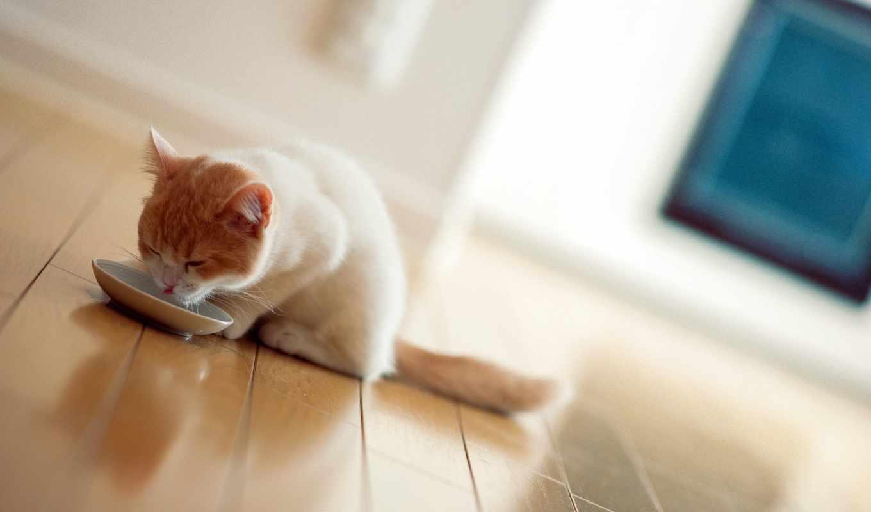 ключ, кота, para, comida, июнь,