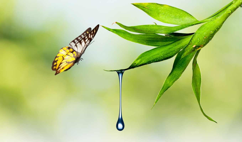 бабочка, drop, waters, природа, water, фотообои, капли, лист, растение, астане,