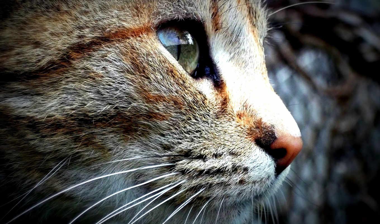 zhivotnye, кот, страница, птицы, фоны, банка, красивые,