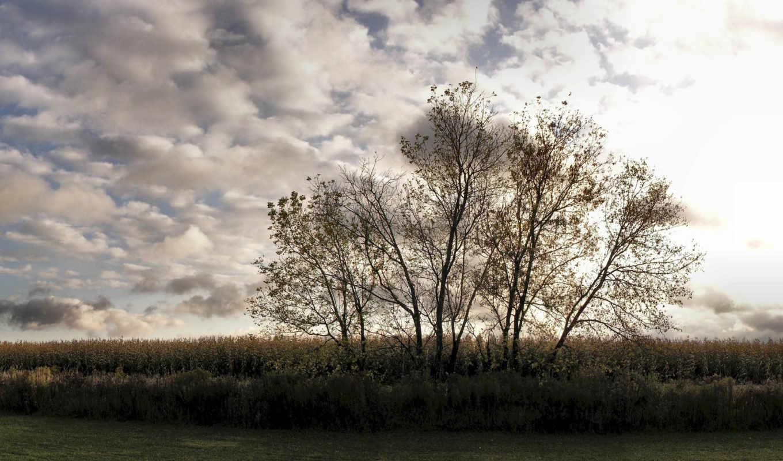 небо, трава, деревья, разрешении, картинка,