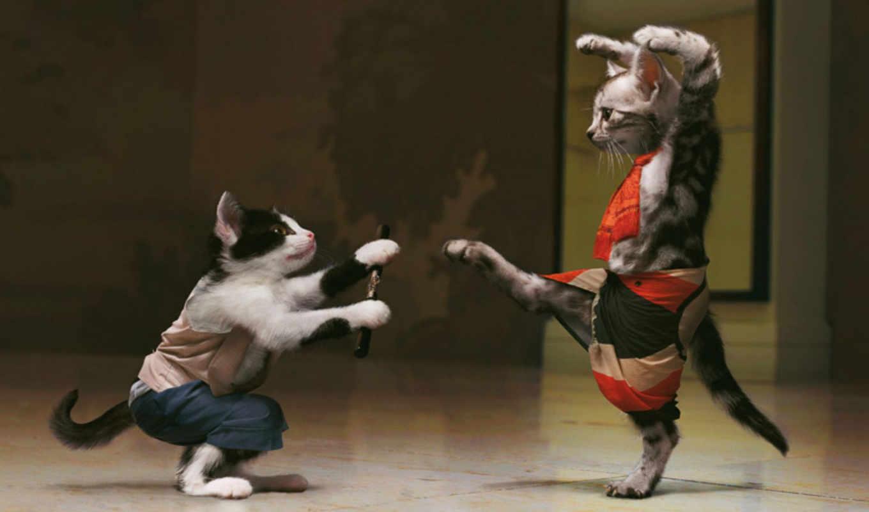 фу, кунг, боевое, котов, στην, животные, cat, desktop, дата, sfondi, gratis, дрессировка, юмор, одежде, костюм, игривые, коты, котята, пара, абстракция, код, they,
