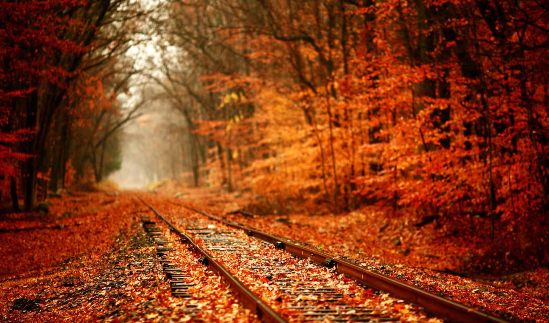 autumn, railway, природа, дорога, железная, листья, railroad, опавшие, рыжая, картинка, рельсах, путей, пейзажи, картинку, рыжий, tracks, деревья, железнодорожных, forest,
