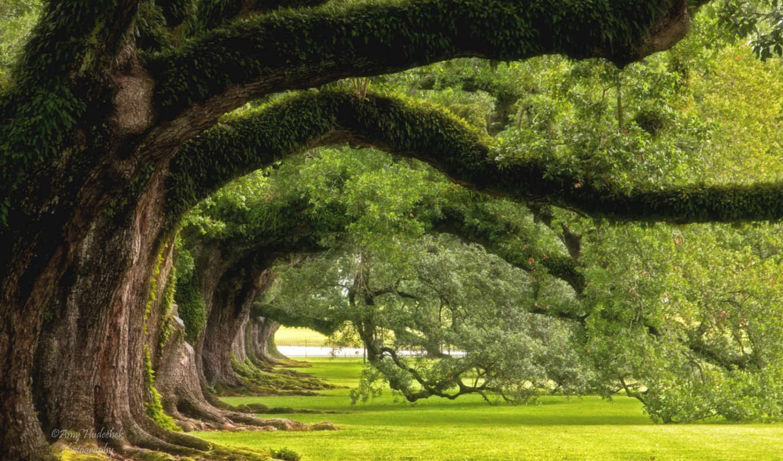 landscape, mississippi, louisiana, дуб, река, розовый, аллея, плантация, vacherie, images,