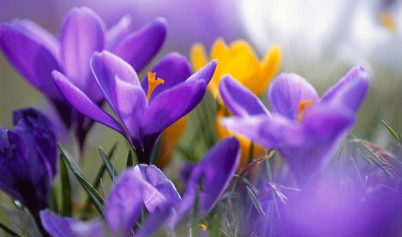 цветы, summer, мар, community, нотки, сиреневые,