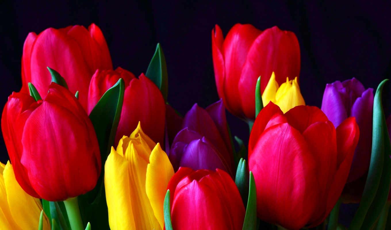 тюльпаны, cvety, желтые, тюльпанов,